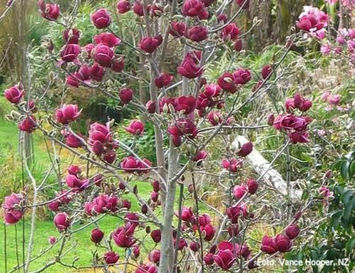 magnolie genie. Black Bedroom Furniture Sets. Home Design Ideas